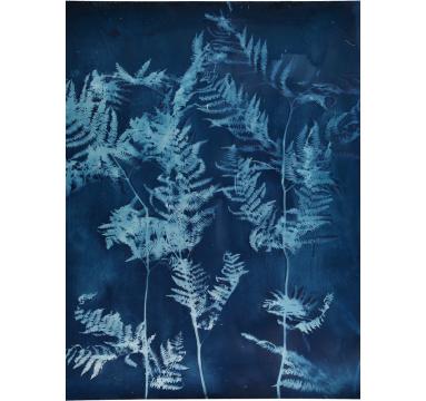 Tessa Shaw - Wild and Blue - courtesy of TAG Fine Arts