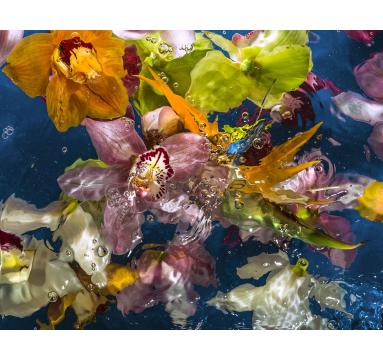 Allan Forsyth - Aqua Flora no.1 - courtesy of TAG Fine Arts