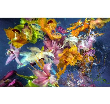 Allan Forsyth - Aqua Flora no.6 - courtesy of TAG Fine Arts