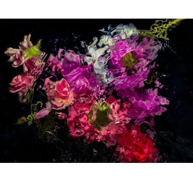 Allan Forsyth - Aqua Flora no.7 - courtesy of TAG Fine Arts