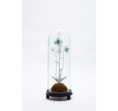 Justine Smith - Specimen Meconopsis Betonicofolia - courtesy of TAG Fine Arts
