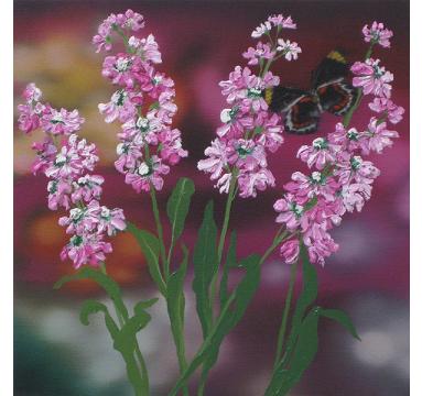 Sumiko Seki - Black Jezebel Butterfly & Pink Stocks - courtesy of TAG Fine Arts