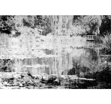Katsu Yuasa - The Light Garden #1 - courtesy of TAG Fine Arts