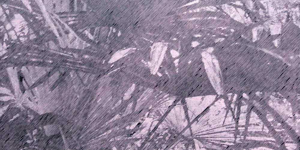 Katsutoshi Yuasa - Tristes Tropiques #2 - courtesy of TAG Fine Arts